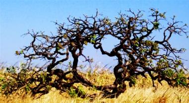 árvores-retorcideas