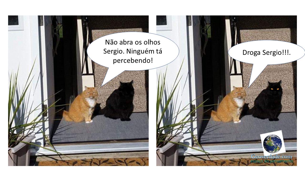 gatos piada